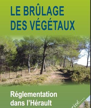2020_11_14_brulage_des_vegetaux.jpg