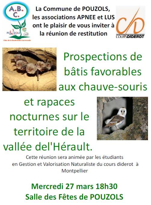 prospections_batis_chauve_souris.jpg