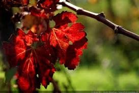 fete_automne_2016.jpg